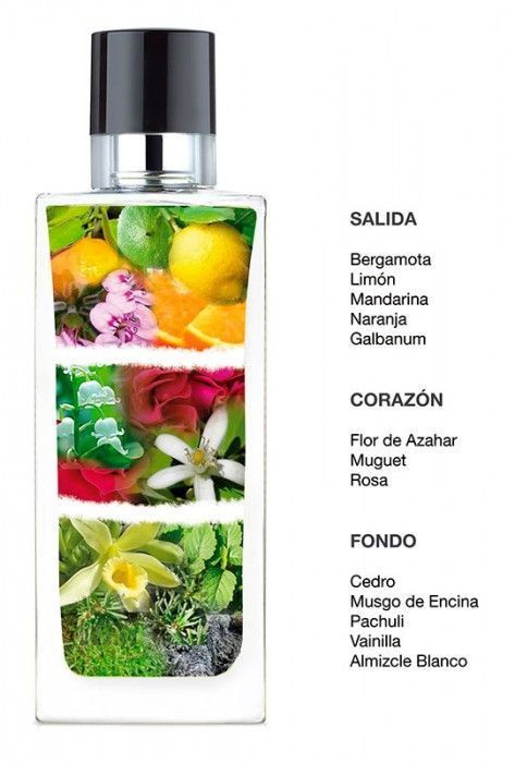 piramide-olfativa-perfumes