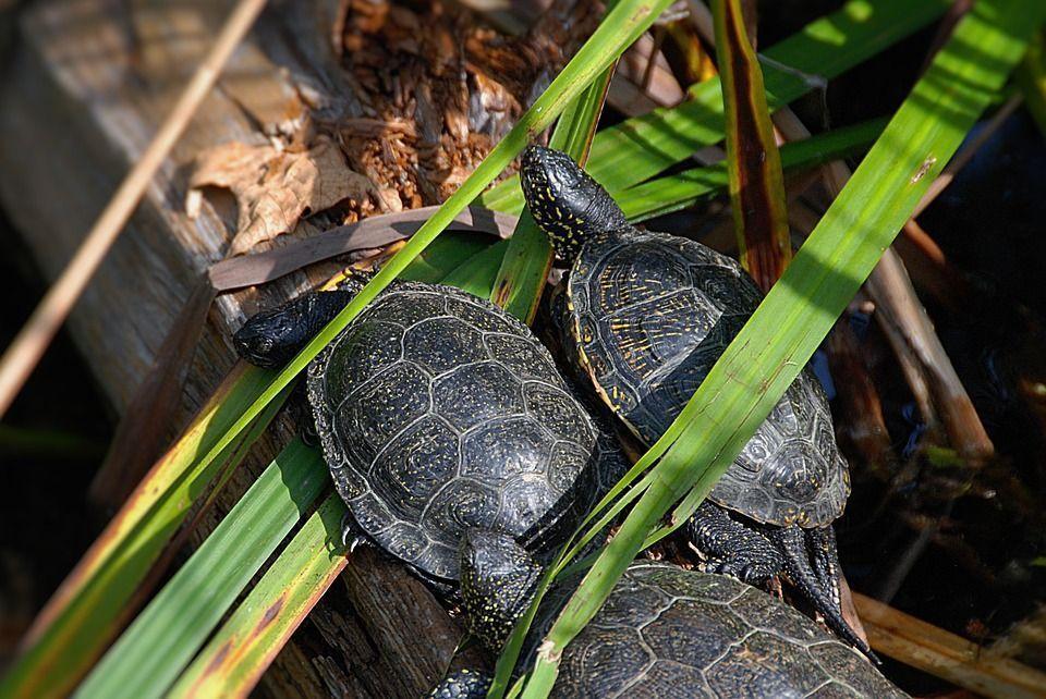 Zoo Marsh Turtles Close Animal