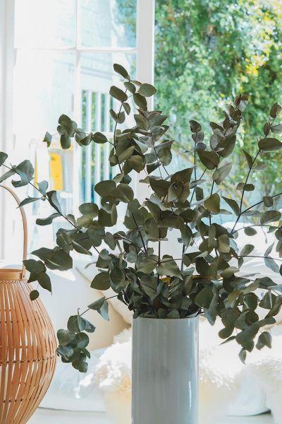tendencias-decoracion-naturaleza